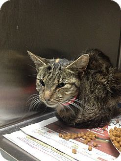 2/26/16  Scarlet - A21026251 was a stray who was taken in by kind people. She is now in foster care, but in need of a caring home. She is being cared for by Animal Care and Control Team of Philadelphia.