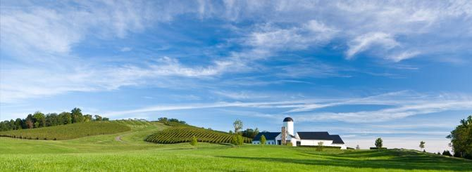 The rolling hills are home to Virginia's most expensive wines.