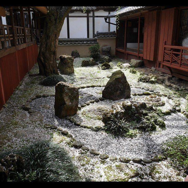 中井タクシーの京都観光情報 十輪寺の散り桜‼️ #Kyoto #Japan #Shrine #Temple