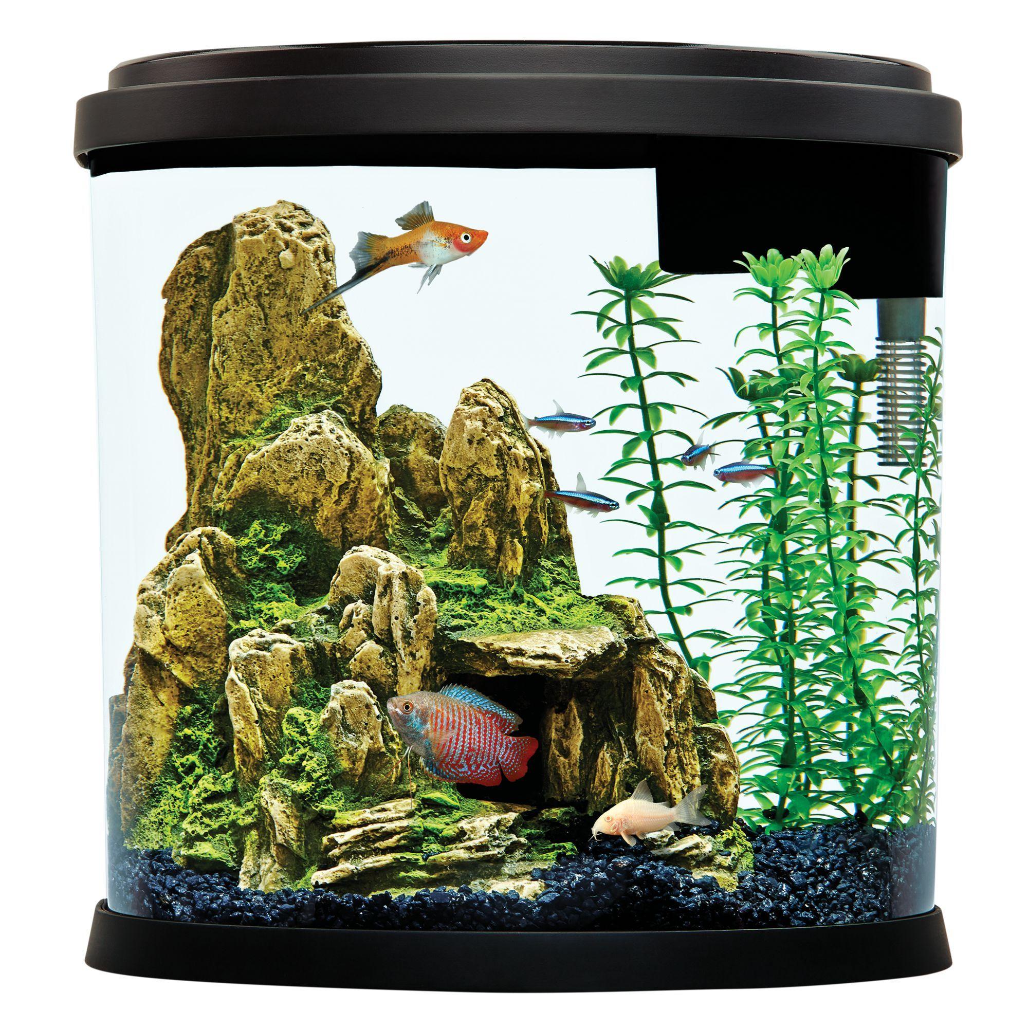 Top Fin Enchant Aquarium 3.5 Gallon, black/gravel Fish