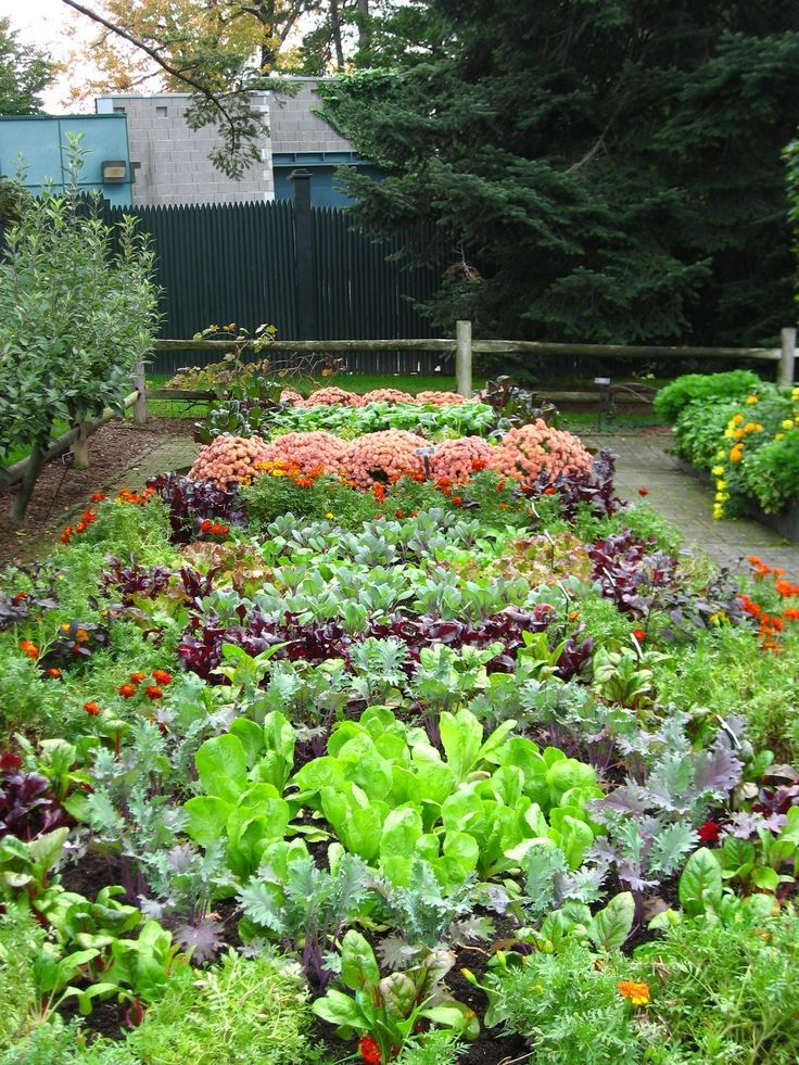 Blend a variety of vegetables together in a veggie garden to create - diseo de jardines urbanos