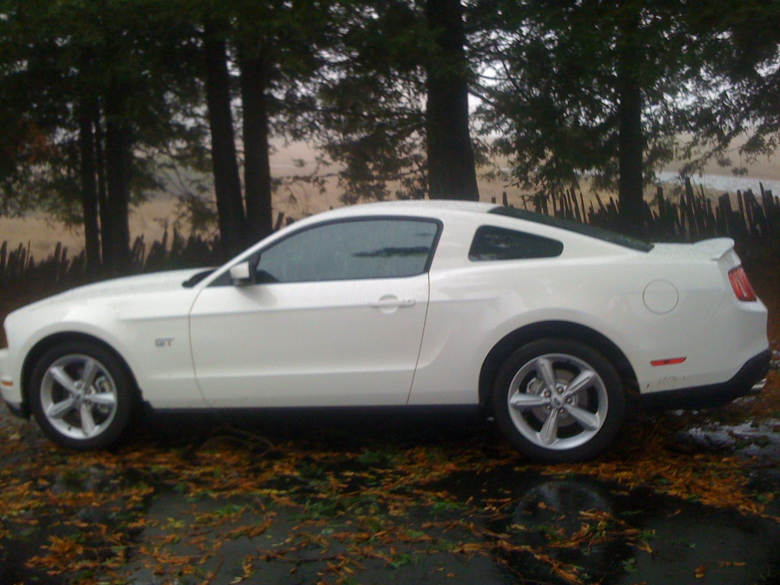 Affordable dream car white mustang 2010 gt it s only a matter of time