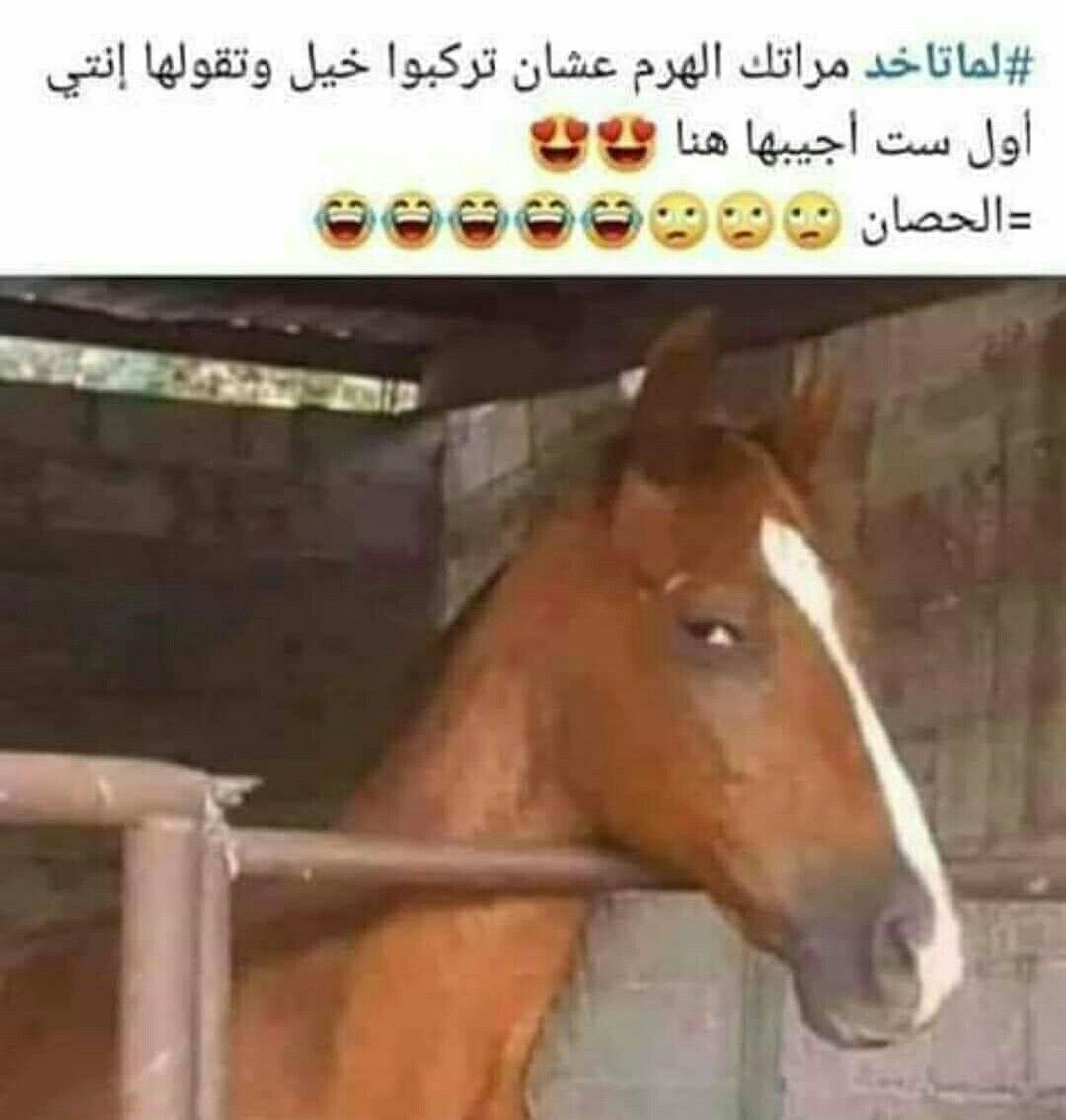 Pin By Mahmoud Abdel Rahman On بالعربى Funny Pictures Funny Memes Morning Humor