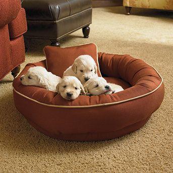 Chew Resistant Cordura Pet Bed Frontgate Dog Pet Beds Pet Beds Pets