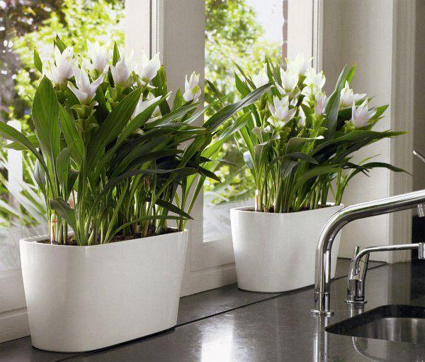 Como dise ar el jard n con macetas de diferentes formas for Jardines colgantes para interiores