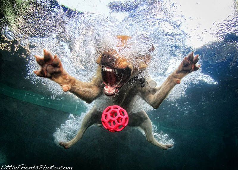 Dogs Catching Ball Under Water by Seth Casteel (5)
