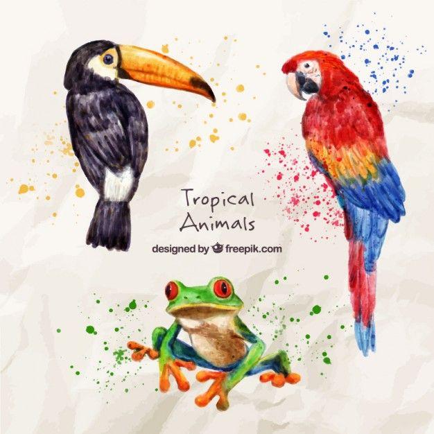 Aquarelle Oiseaux Exotiques Avec Une Grenouille Watercolor