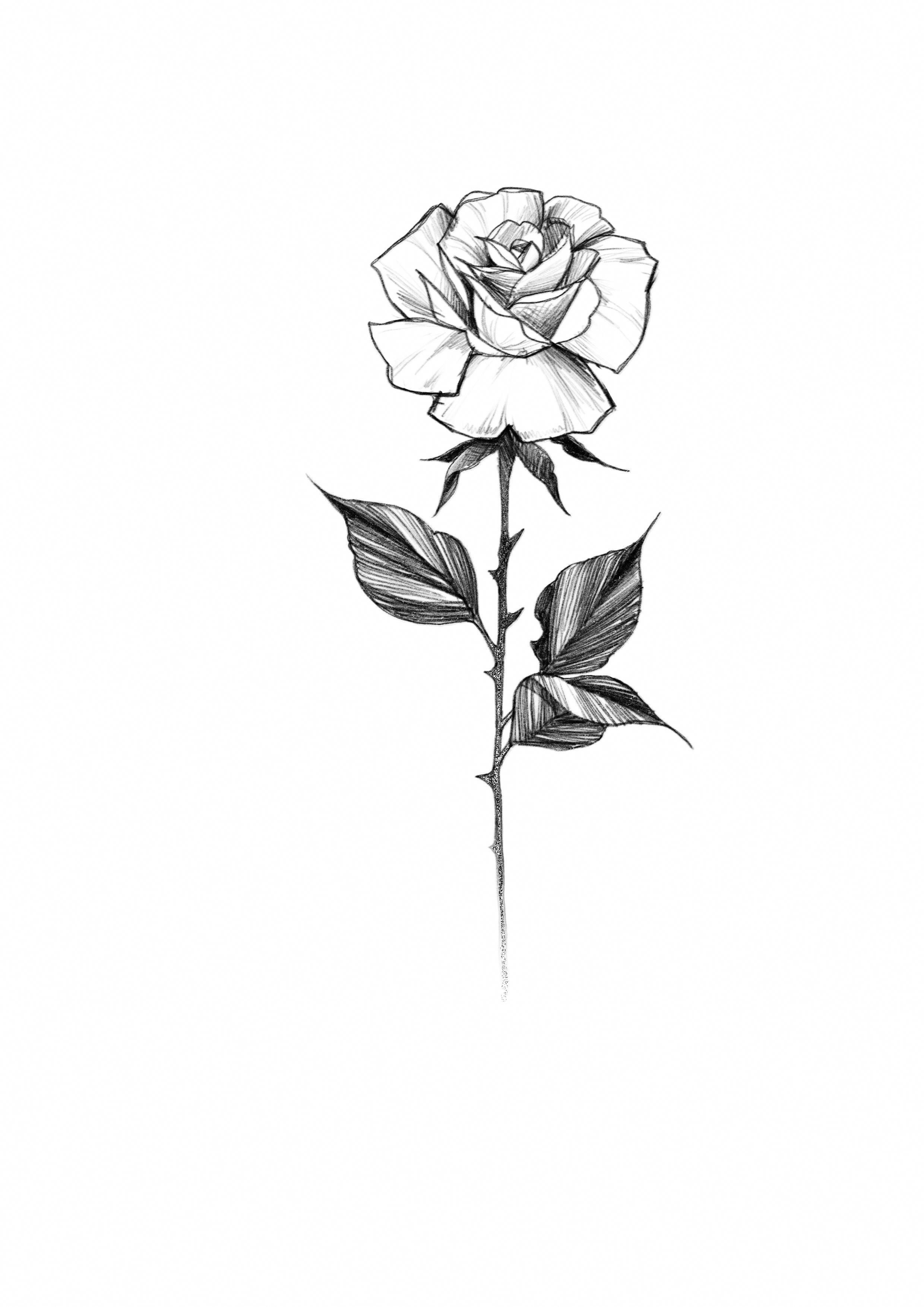 Pin By Harry Angel On Flowers Roses Drawing Rose Tattoo Stencil Tattoo Outline Drawing