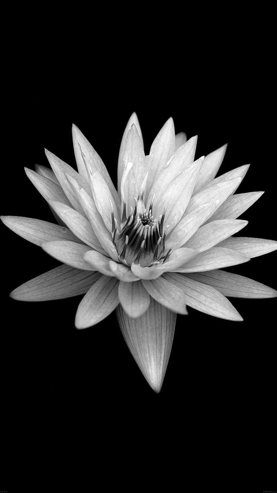 Dark Flower Black Xperia Z Background iPhone 8
