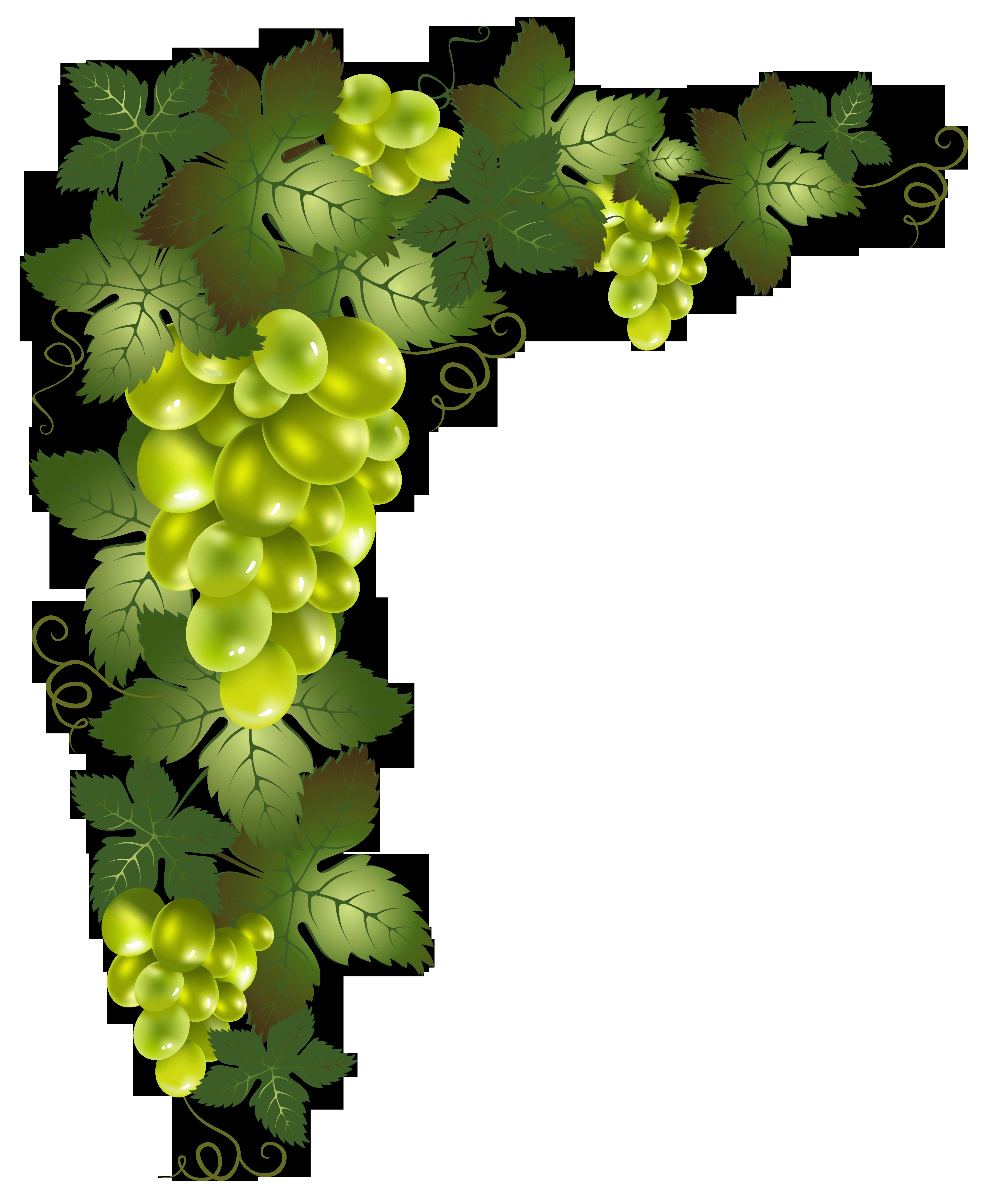 Transparent Vine Decorative Element PNG Picture