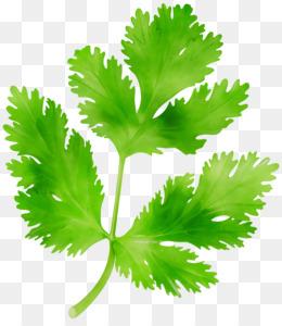 Photo of Clip art Parsley Portable Network Graphics Coriander Greens – desca …