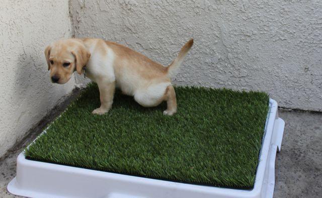 Dog Potty Mat Haustiere, At least und Hering