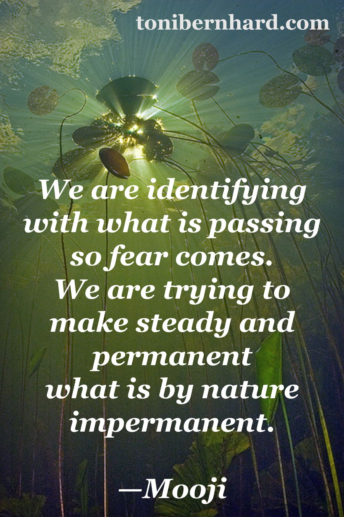 Spiritual Life Quotes And Sayings Identifying With What Is Impermanent Brings Suffering Buddhist