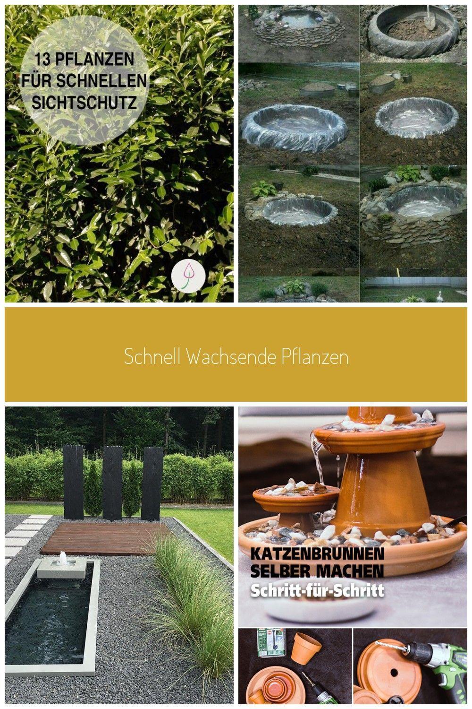 Diese Pflanzen bieten schnellen Sichtschutz für Garten und