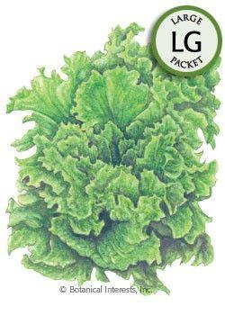 Individual Seeds Botanical Interests Lettuce ButterCrunch Organic Vegetable