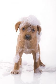 Benefits Of Oatmeal Bath For Dogs You Must Know Flea