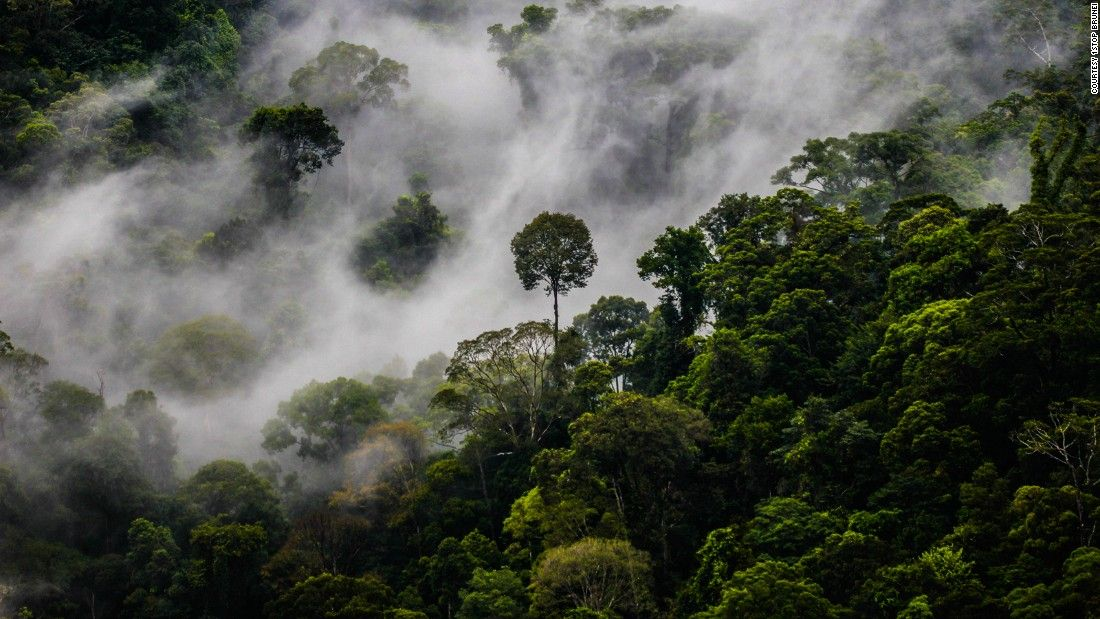 Brunei jungle - paradise for lovers of the natural world, nearly three  quarters of Brunei lies under a dense layer of tro…   Rainforest, Tropical  rainforest, Brunei