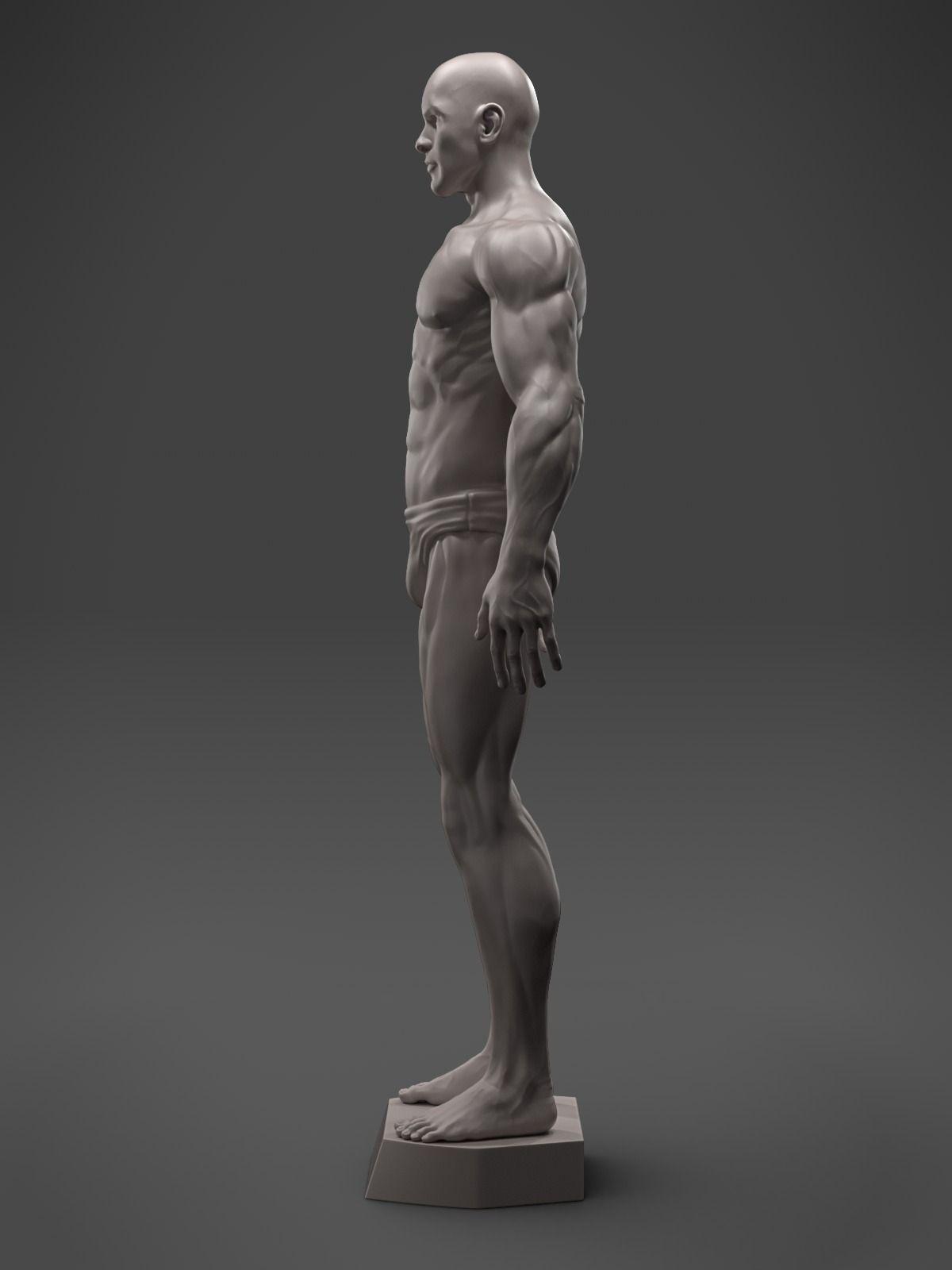 male-anatomy-sculpture-3d-model-stl.png (1200×1600)   Human Anatomy ...