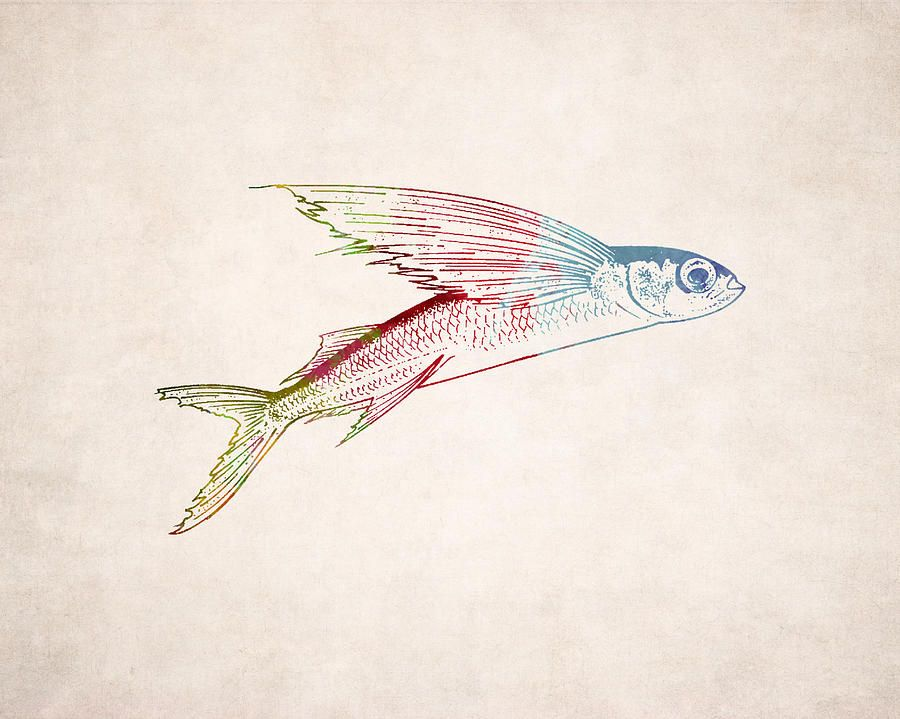 flying fish art flying fish illustration digital art