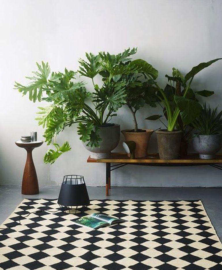 Le 12 piante da appartamento musthave secondo Pinterest