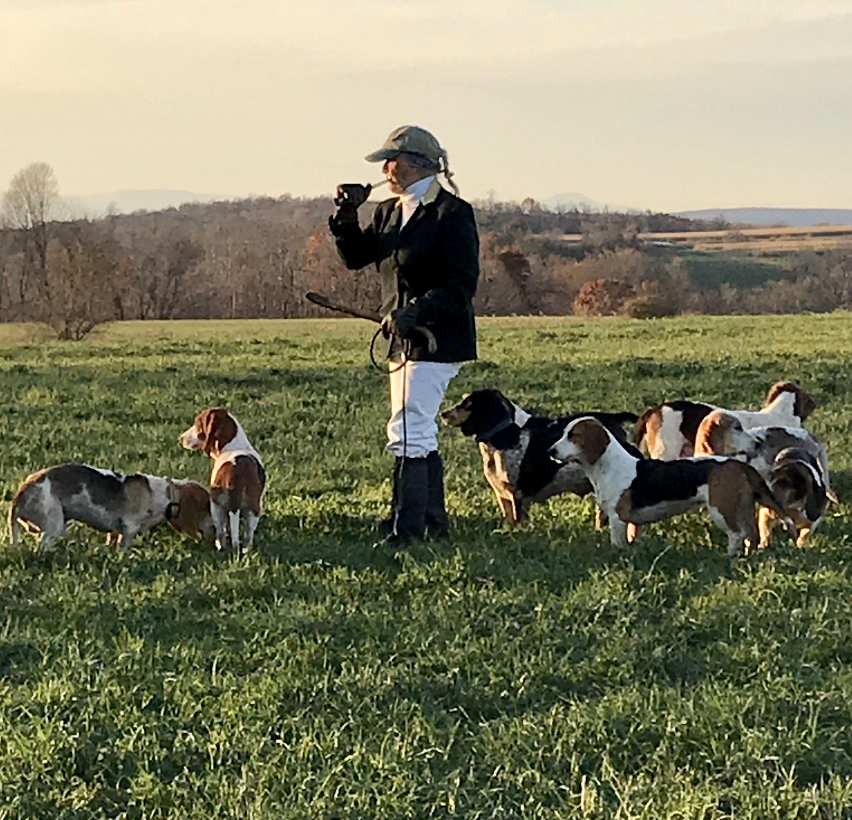 Beagling With The Sandannona Harehounds Millbrook Ny Horses