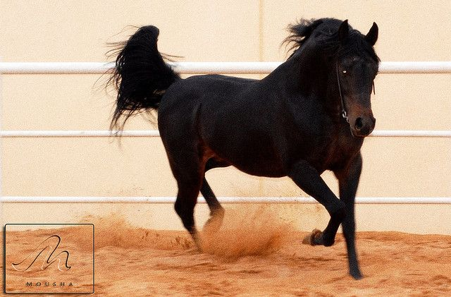خيل تسر بشوفها وبأصلها سر الجمــــــال Horse Life Horses And Dogs Horse Love