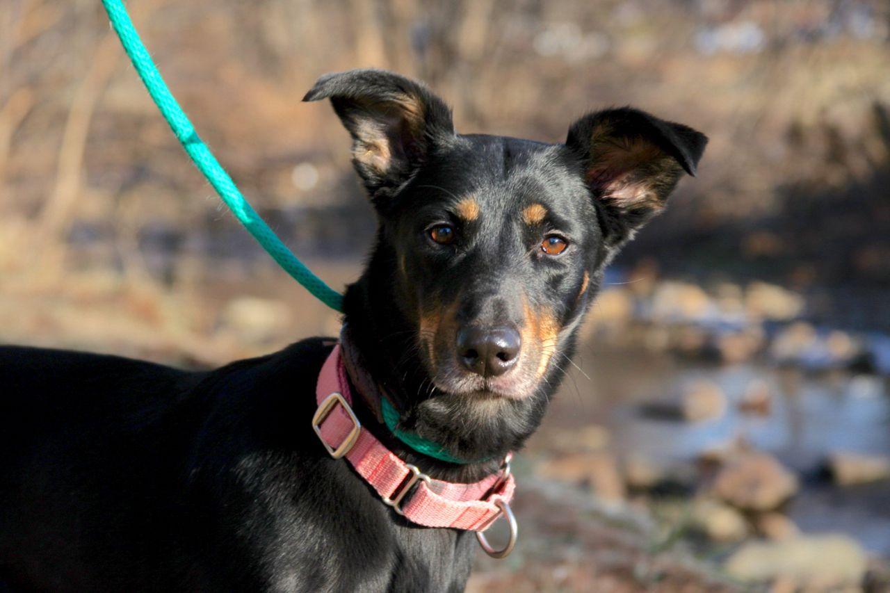 Adopt Athena On Athena Humane Society Pets