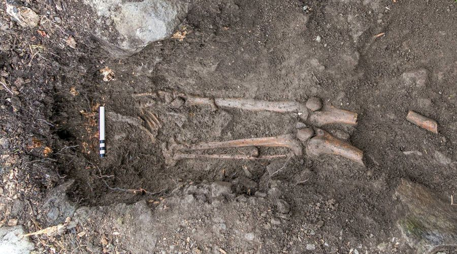 1,000yo skeleton of 'violent death' victim found after tree uprooted in Ireland http://sumo.ly/88oI  © Sligo-Leitrim Archaeological Services