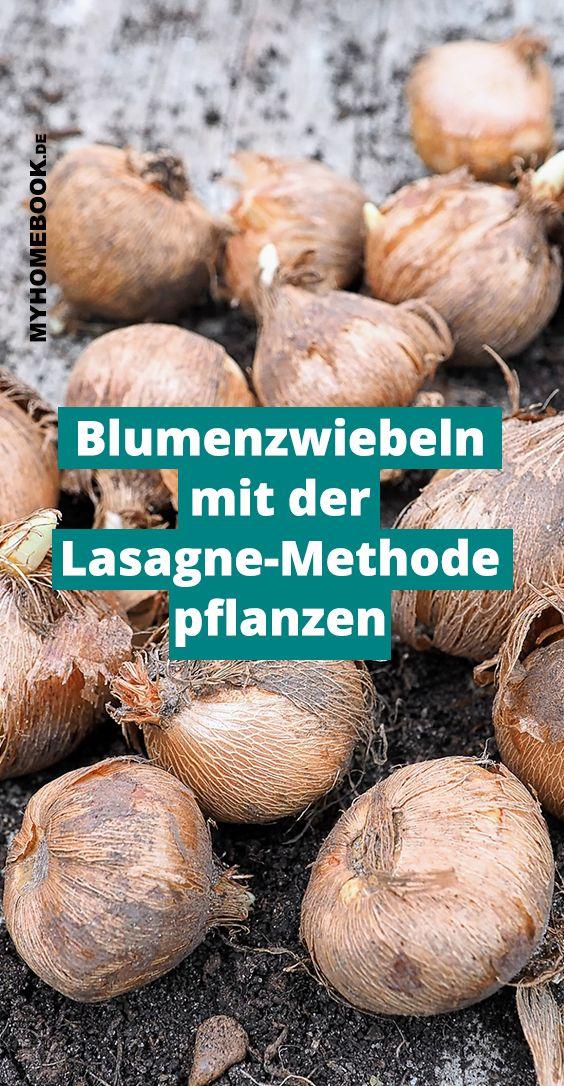Blumenzwiebeln pflanzen – mit der Lasagne-Methode