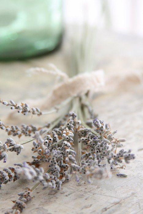 ~ lavender