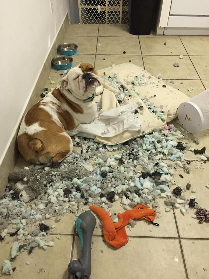 This is probably familiar, isn't it? LOL! This pup totally needs a #BullymakeBox.