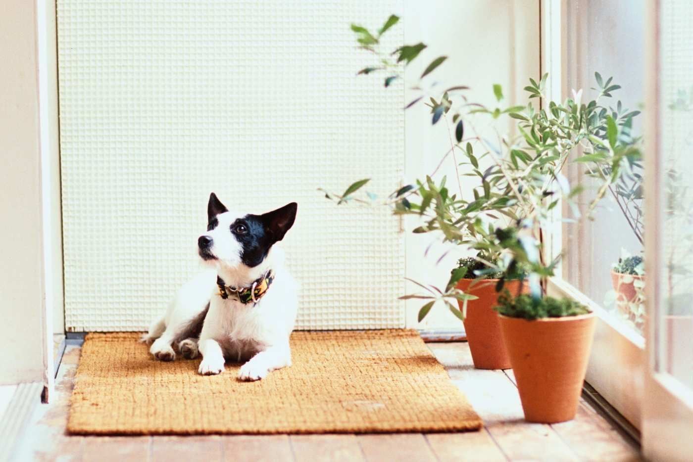 The Best Cat And Dog Safe Plants According To Experts In 2020 With Images Dog Safe Plants Cat Plants Cool Plants