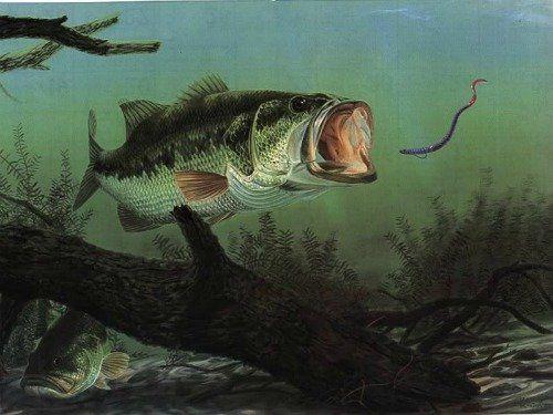 largemouth bass eating - photo #25