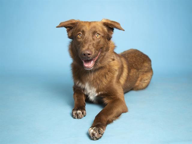 Meet Alfie Arizona Humane Society Humane Society Dog Friends