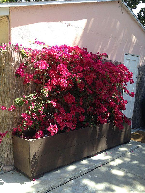 Custom Flower Planter For Bougainvillea Outdoor