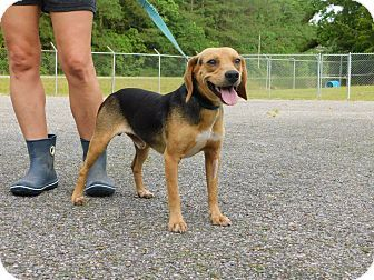 Oakdale La Beagle Mix Meet Skully A Dog For Adoption Http