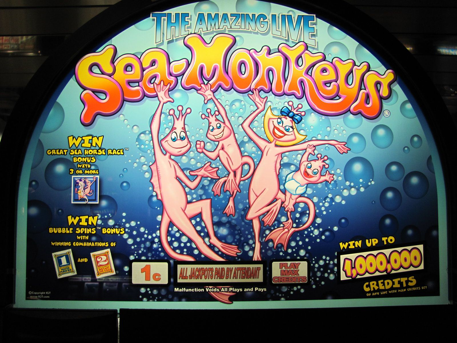 Pin On Sea Monkeys
