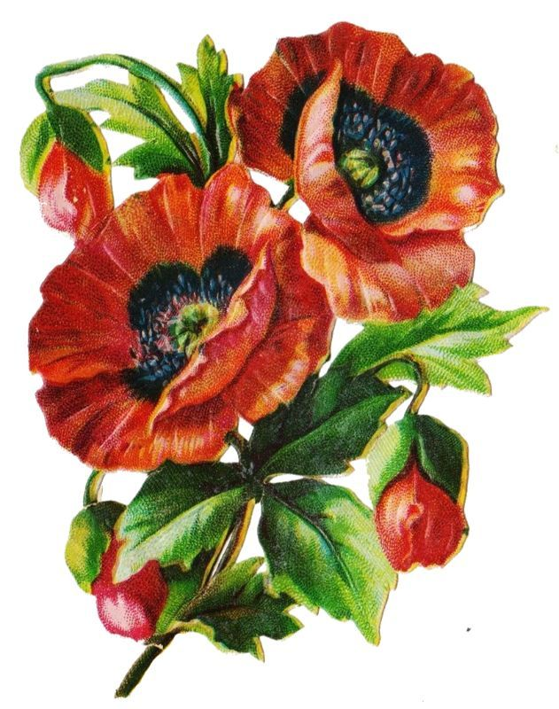 Mohnblumen Flower Painting Flower Artwork Floral Painting