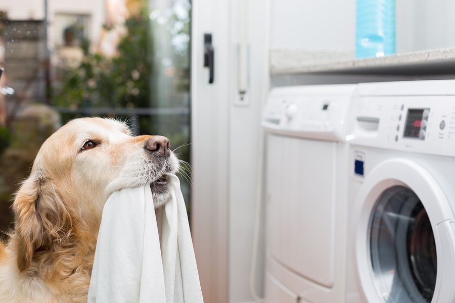 How The Washing Machine Can Make Your Dog Itch Dog Friendly Vacation Dogs Dog Love