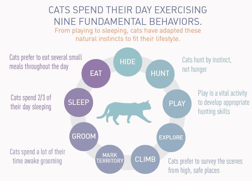 How Does Your Cat Spend Their Day Does It Look Like This Repin Puppy Cuddles Animal Facts Cat Health