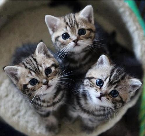 3little Kittens Lost Their Mittens Kittens Cutest Cats And