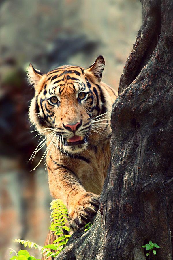 Source Luxropes Ausgestopftes Tier Wilde Katzen Tiere