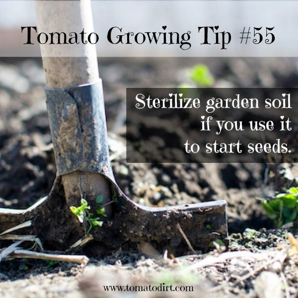 Soil For Tomatoes: Potting Mix To Use When Growing Tomatoes From Seeds