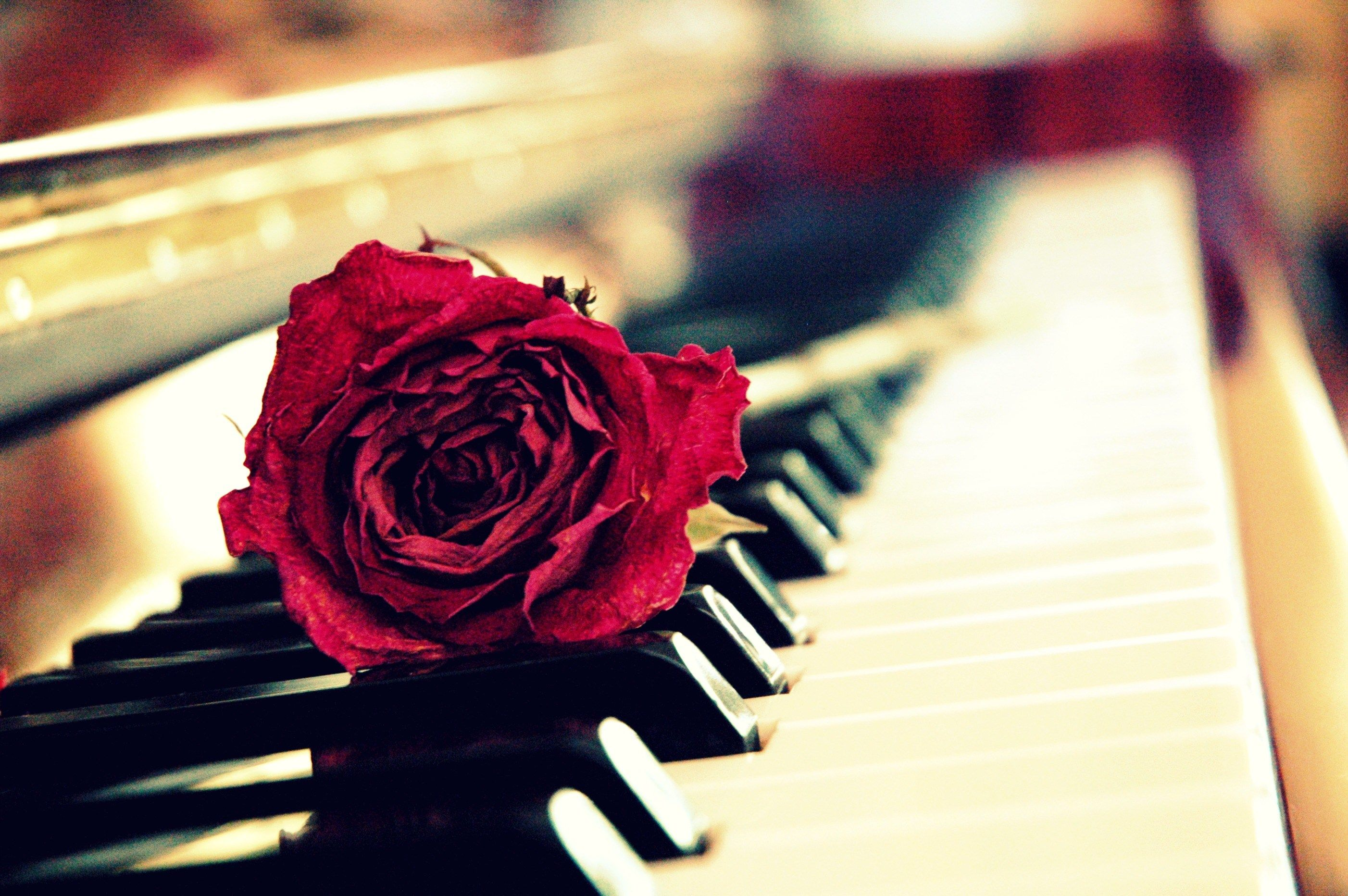 Rose Piano Wallpaper