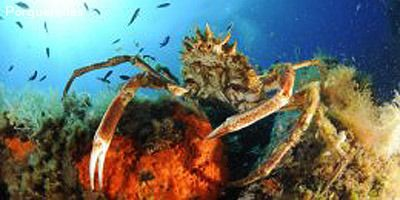 Diving detours in the other south of France - part 1 ...  |Scuba South France
