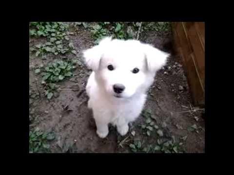 명탐정코난 극장판 피규어 인형 귀여운 강아지 고양이 동영상 Cat cute dog puppy video - http://www.doggietalent.com/2014/12/%eb%aa%85%ed%83%90%ec%a0%95%ec%bd%94%eb%82%9c-%ea%b7%b9%ec%9e%a5%ed%8c%90-%ed%94%bc%ea%b7%9c%ec%96%b4-%ec%9d%b8%ed%98%95-%ea%b7%80%ec%97%ac%ec%9a%b4-%ea%b0%95%ec%95%84%ec%a7%80-%ea%b3%a0%ec%96%91/