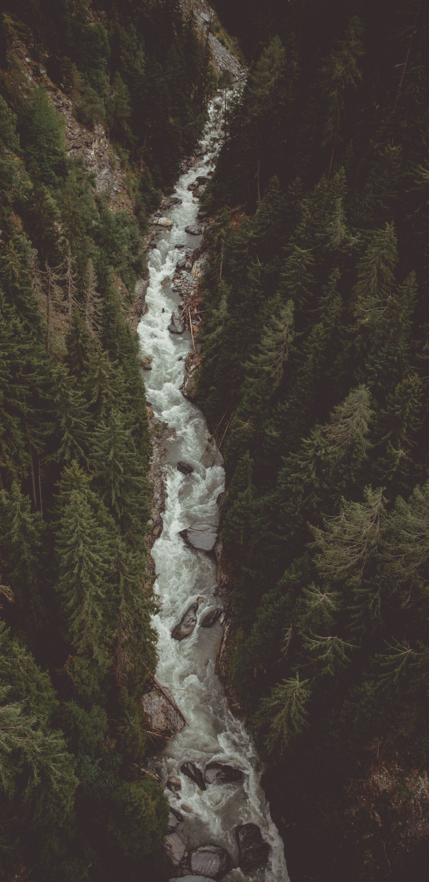 1440x2960 River Water Stream Forest Nature Aerial View Wallpaper River Photography Aerial View View Wallpaper