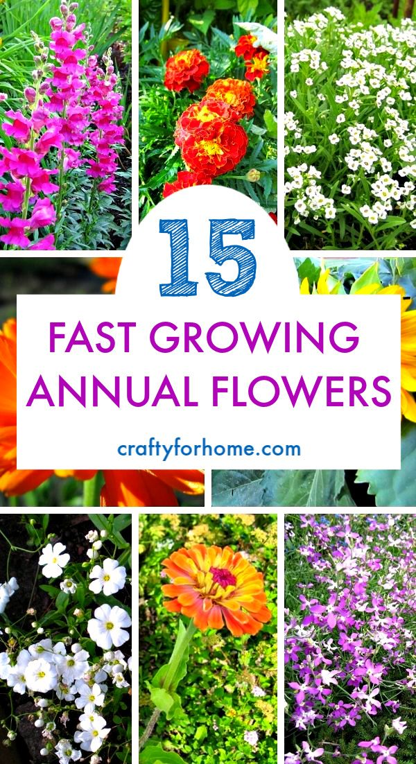 Photo of 15 Easy To Grow Annual Flowers From Seed
