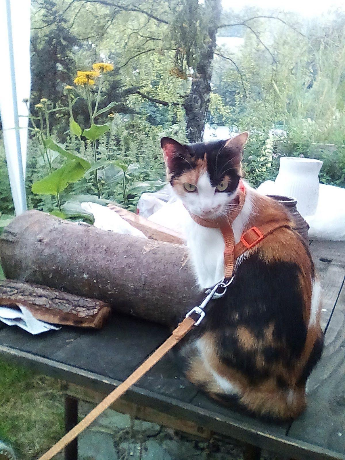 Www krásné kočička fotky
