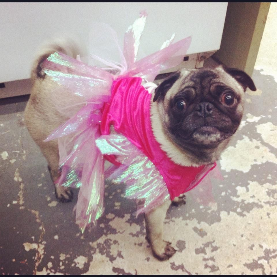 Ballerina Pug Pet Halloween Costumes Pug Love Pug Life